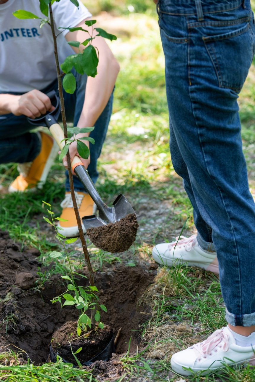 cropped view of couple planting tree with shovel