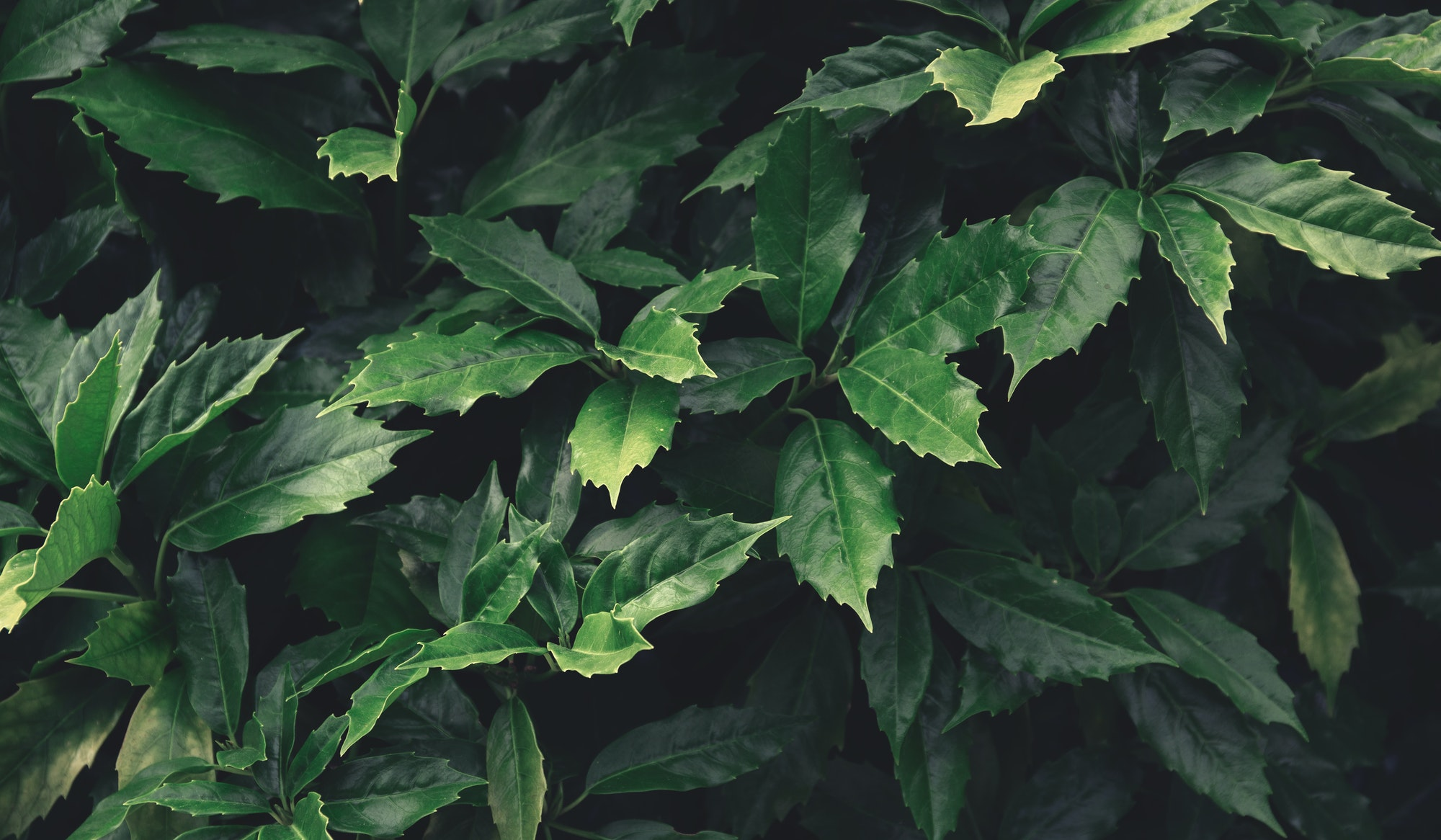 Green leaves pattern background,