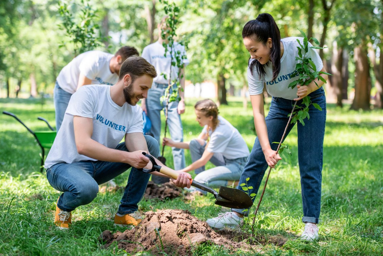 young volunteers planting trees in green park together