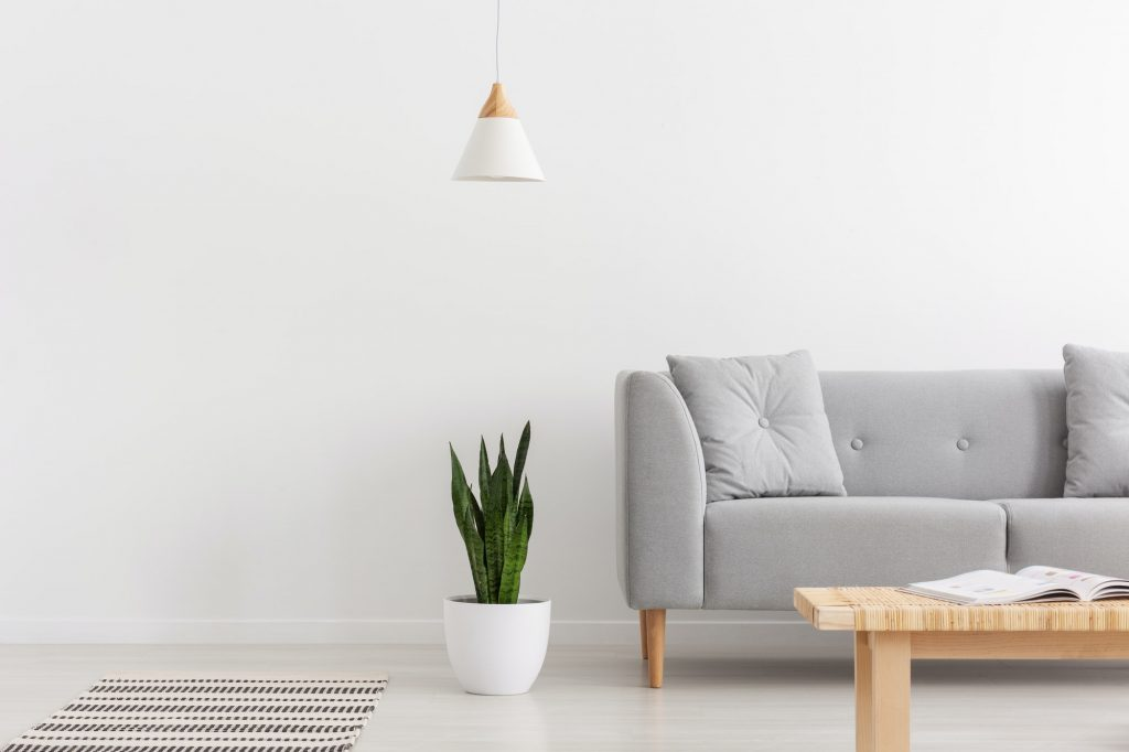 White lamp above green plant in pot next to grey sofa with pillo