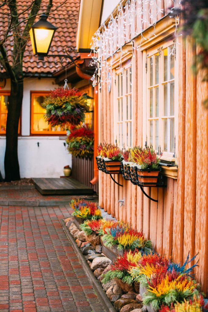 Bush Of Colorful Calluna Plants In Pots In Garden Flower-Bed