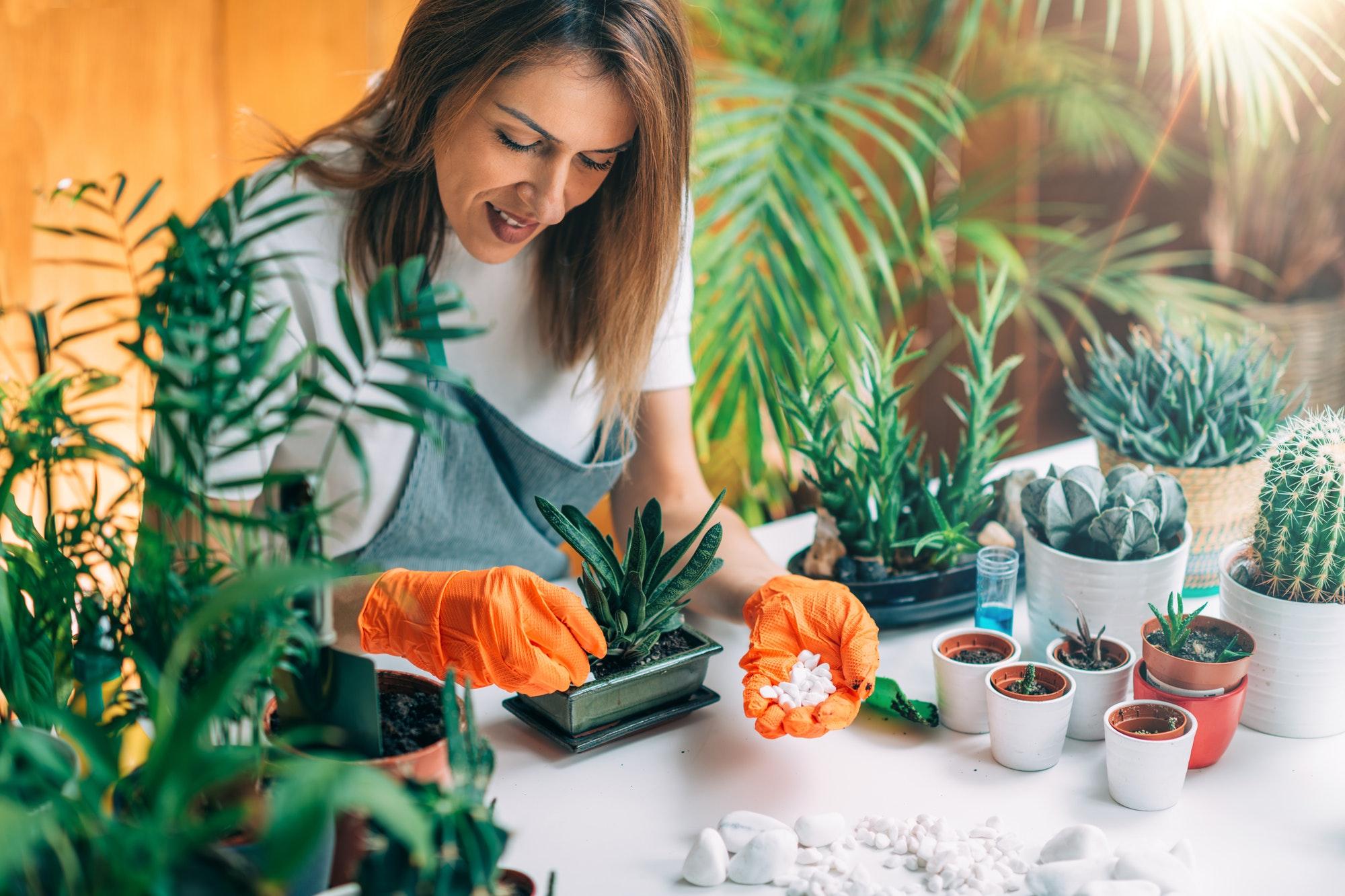 Indoor Gardening, Starting a Home Garden