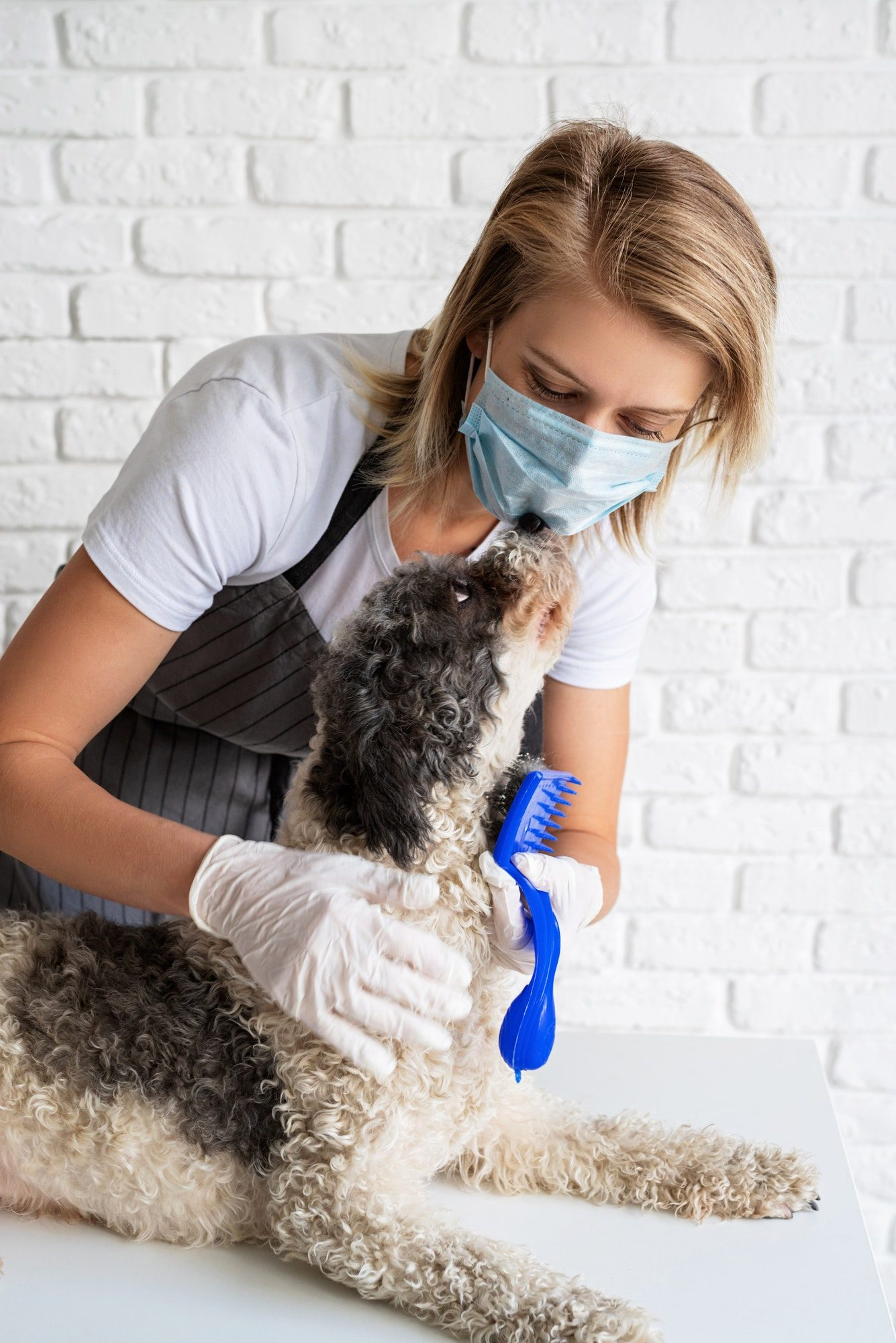 A young caucasian blond woman in a mask combing a dog