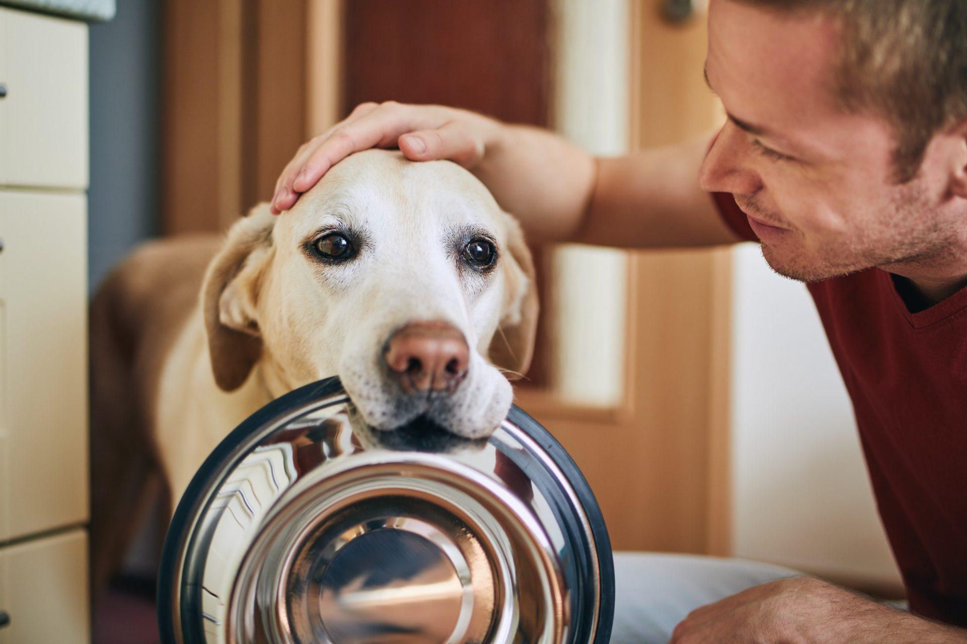 Understanding the five senses of your pet