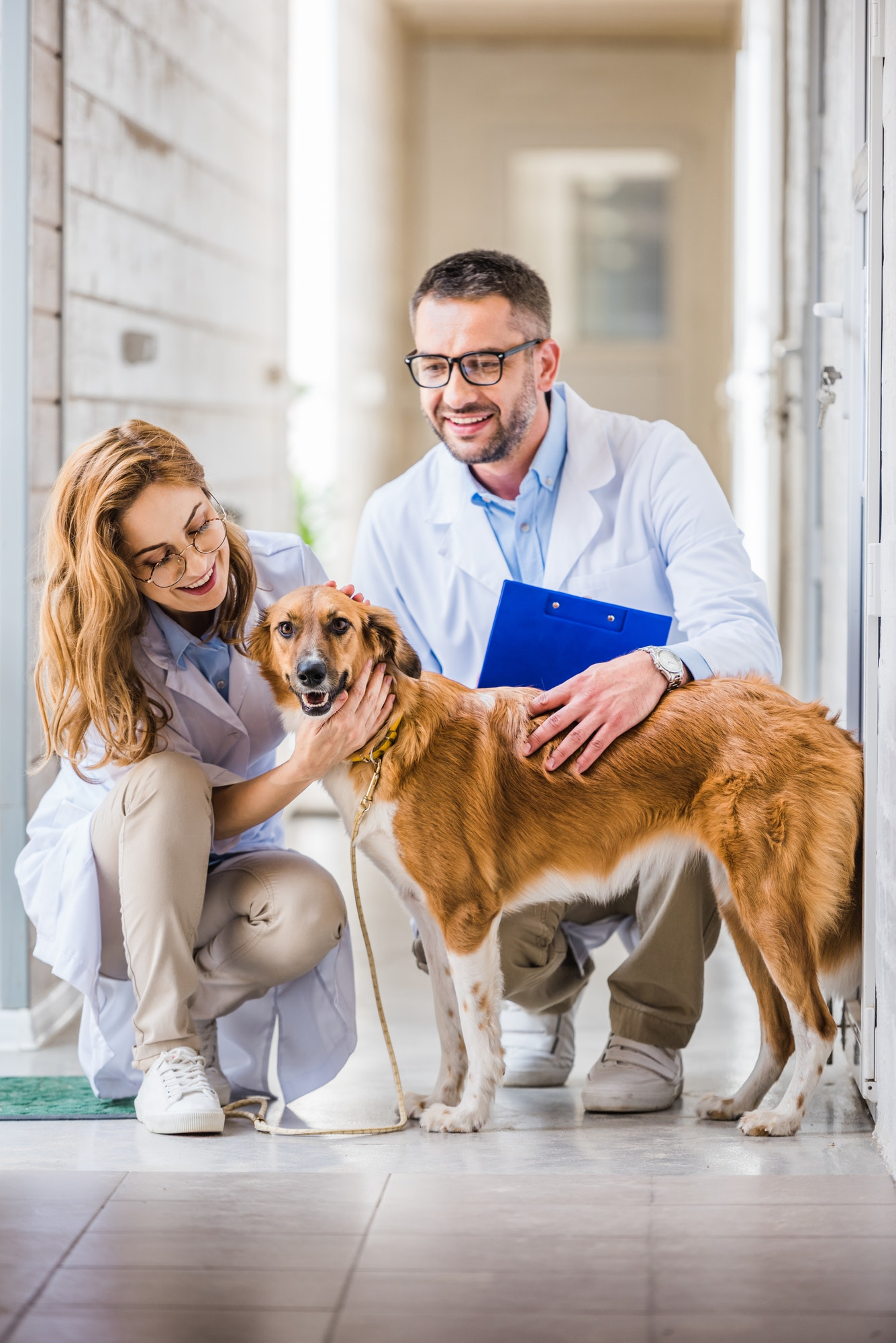 two veterinarians squatting and palming cute dog at veterinary clinic