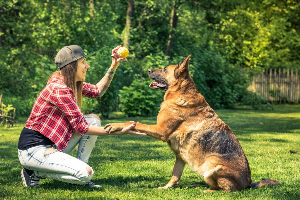 Woman and dog friendship, owner and pet