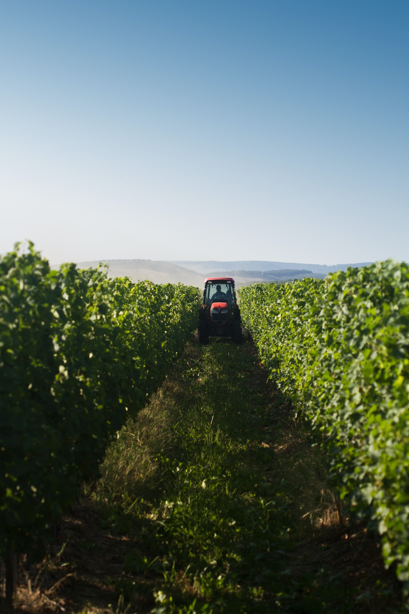 red tractor working in the vineyard
